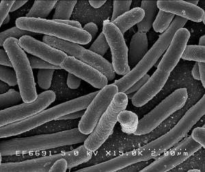 equipos medicos antimicrobiano
