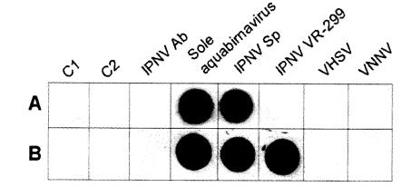 EXPERIMENTOS - IPNV EN PECES